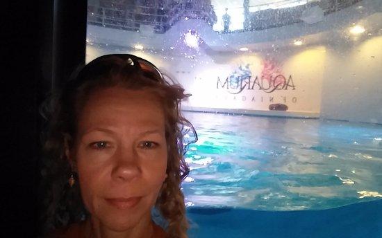 Aquarium of Niagara: Seal display stage