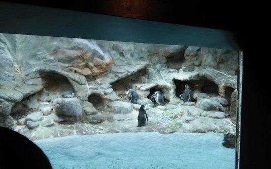 Aquarium of Niagara: Penguin habitat