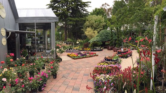Tea Tree Gully, Australia: Newmans Nursery stocking a comprehensive range of all garden products - when reviewing the Topia