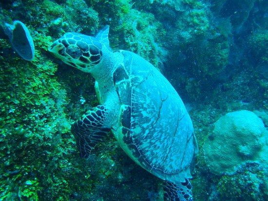 Phocea Mexico : Barracuda