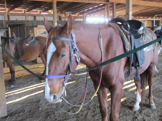 Moneta, VA: Horses were saddled and ready to ride!