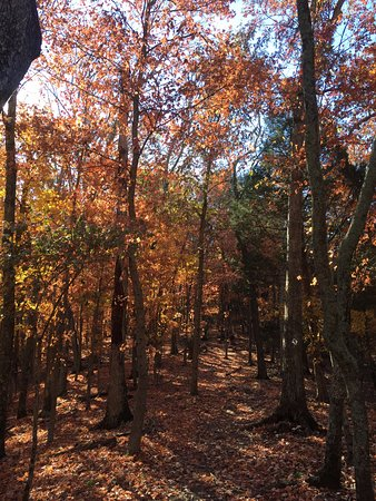 Panther Creek State Park: Beautiful walk on a perfect fall morning!