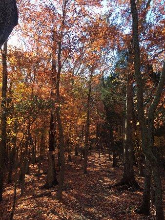 Panther Creek State Park照片