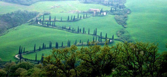 Pienza, อิตาลี: Famous row of Cypress treesin Val d'Orcia.