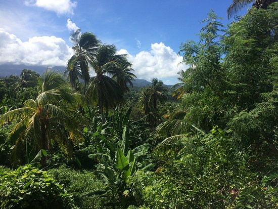 Calibishie, Dominica: Jungle view to the west of our room