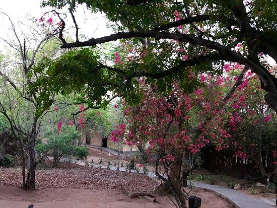 Elephant Plains Game Lodge: Beautiful grounds!