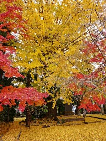 Bilde fra Gionji Temple