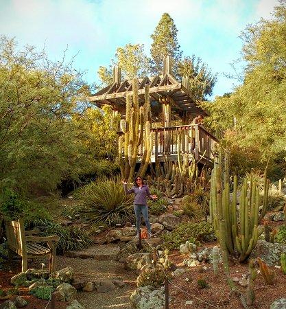 UC Botanical Garden at Berkeley: IMG_20161121_153441311_large.jpg