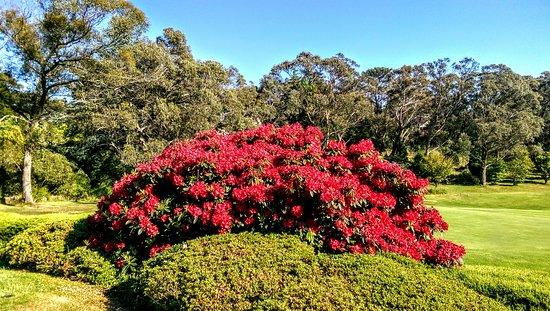 Blackheath, Australia: IMAG0347_large.jpg