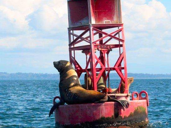 White Rock, Canada: Sea Lions