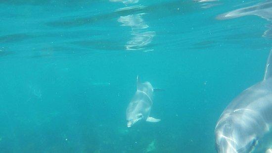New Zealand Diving: Little Barrier Marine Life