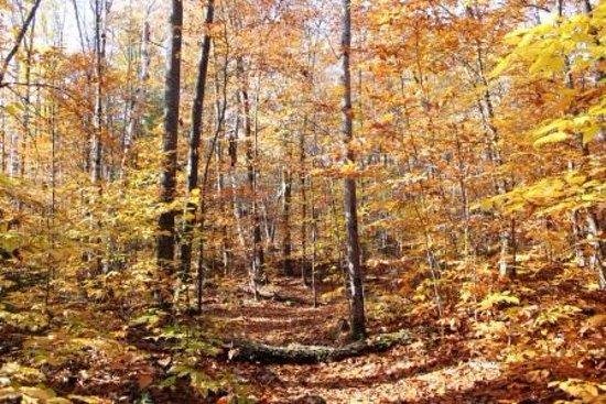 Algonquin Highlands, Canada: Fall exploration!