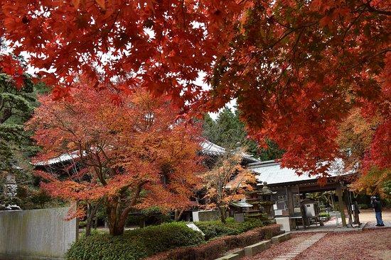 Sakaide, Japan: 本堂周辺の紅葉