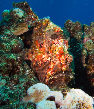 Extended Horizons : Lucky enough to see a ton of frogfish!