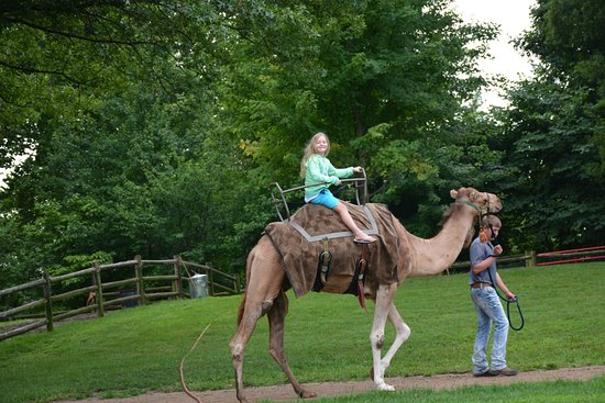 Grant's Farm: Guided camel rides.