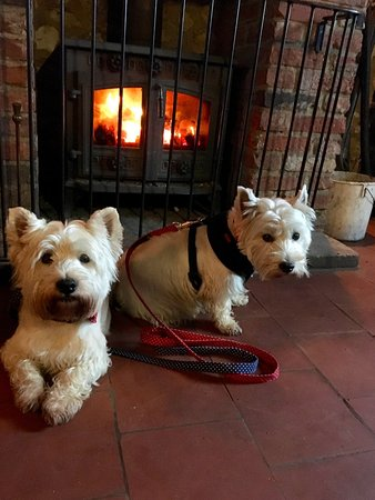 Thornham, UK: Archie & Lulu enjoying the fire.