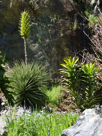 Whangarei, New Zealand: The plant of the day - apparently flowers very infrequently