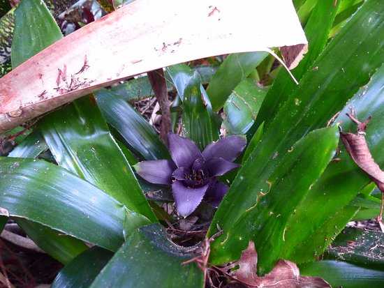 Whangarei, New Zealand: Beautiful bromeliads