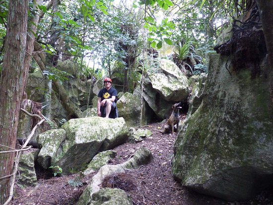 Whangarei, New Zealand: The Rock Forest - wild and archaic