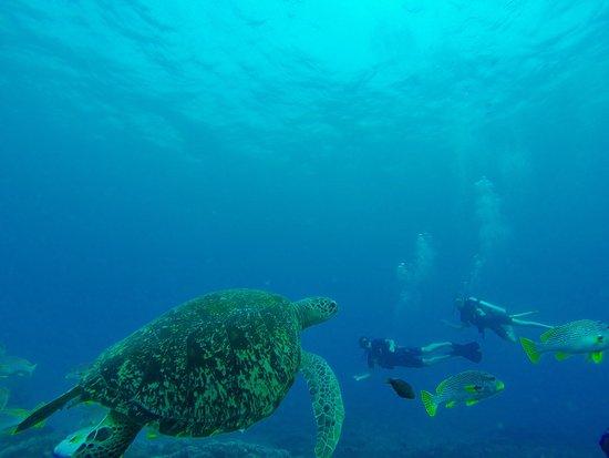 Blue Marlin Dive Gili Trawangan 이미지