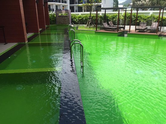Krabi La Playa Resort: pool access room