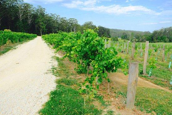 Wauchope, ออสเตรเลีย: Great views