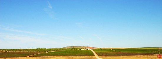 Sociedade Agrícola de Pias - Desde 1973