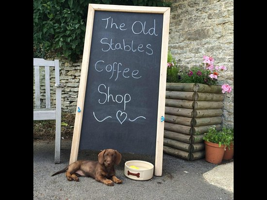 Malmesbury, UK: One of the resident dogs - Twiglet