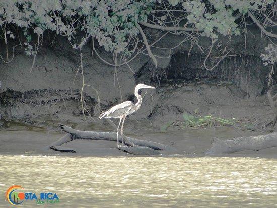 Provincia de Guanacaste, Costa Rica: Varie tipi di uccelli