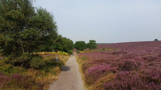 Saxmundham, UK: Dunwich Heath