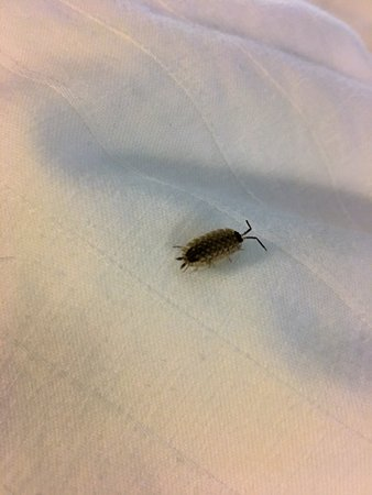 Canton, MI: Not sure what kind of bug it was, but I don't want to find any in my bed!!!