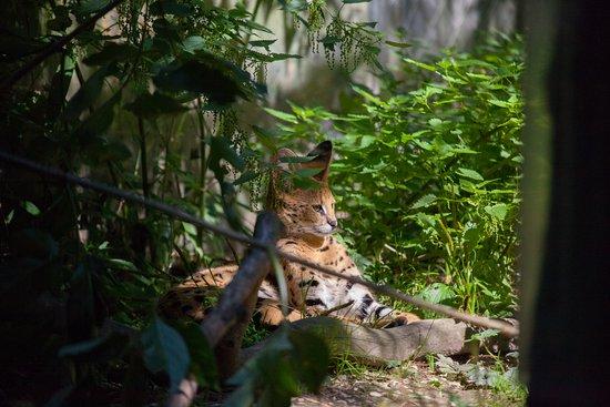 Animals of the zoo de Servion