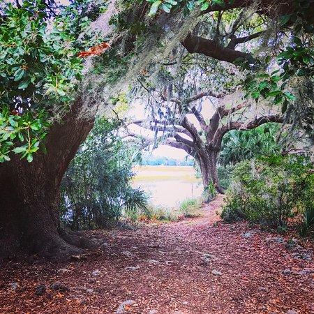 Mount Pleasant, Carolina del Sur: photo4.jpg
