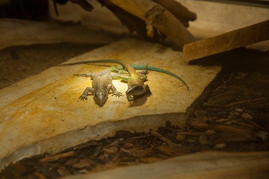 Servion, Suiza: Reptiles from the Tropiquarium