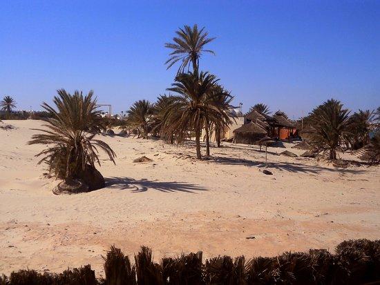 Green Palm Photo