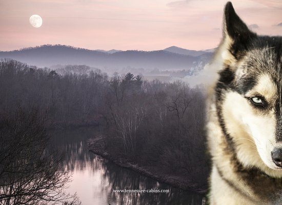 Greeneville, TN: Nola, the friendly Nolichuckey Husky and the view from our Log Cabin
