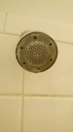 Jasper, AR: Very sedimented shower head in disgusting shower