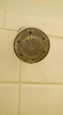 Jasper, أركنساس: Very sedimented shower head in disgusting shower
