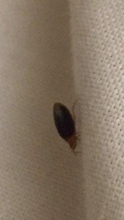 Abba Reino de Navarra Hotel: Bed bugs in room 109