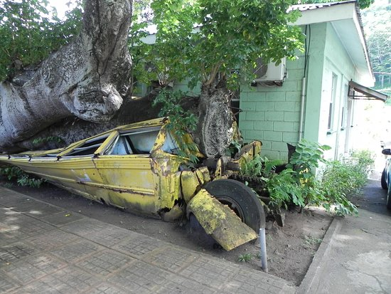 Dominica Botanic Gardens: crushed school bus