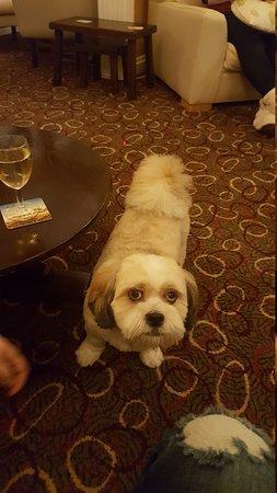 Fairway Country Hotel: 20161116_201454_large.jpg