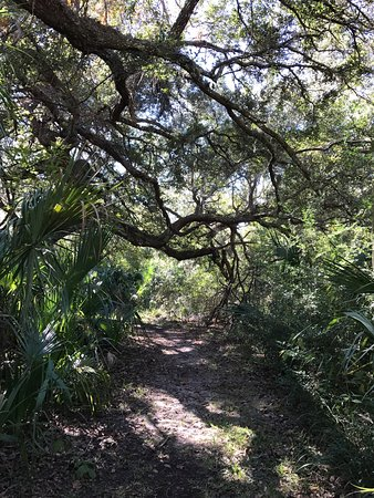 Crystal River Perserve State Park Eco-Walk : photo0.jpg