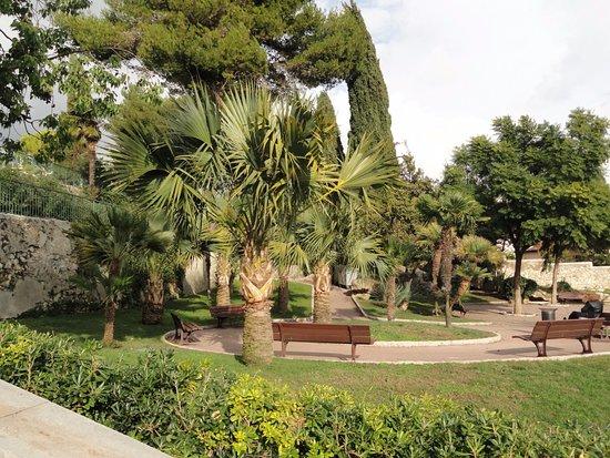 palmiers - Photo de Parc Chambrun, Nice - Tripadvisor