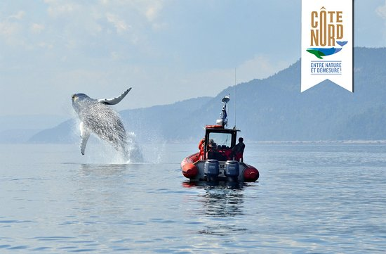 Baie Comeau, Kanada: Croisière aux baleines