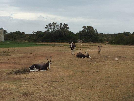Bredasdorp, جنوب أفريقيا: photo6.jpg