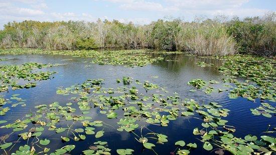 Anhinga Trail: Vista del pantano