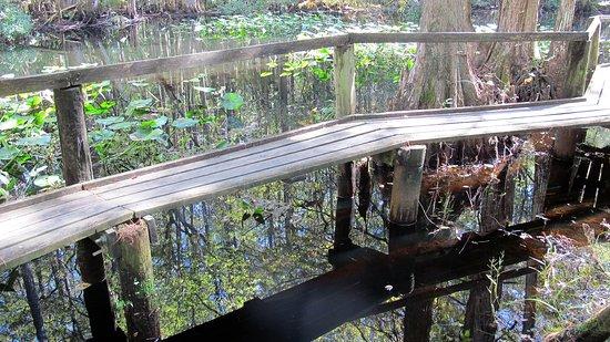 Sebring, Flórida: A cat walk over living water. An alligator lurks here.