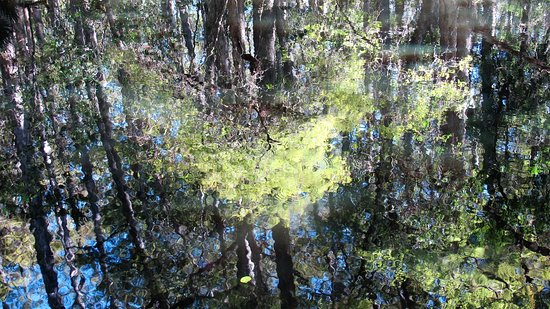 Sebring, FL: This reflection in water made me think of Monet