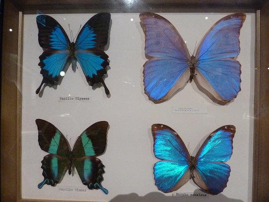 New Plymouth, Nowa Zelandia: Amazing butterflies