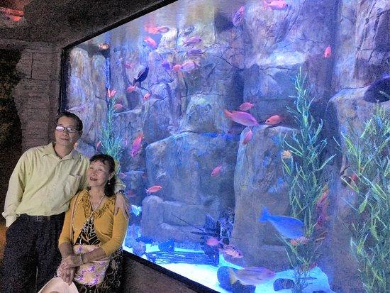 Downtown Aquarium: Một góc thủy cung.